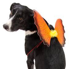 Puppy Halloween Costumes 5 Adorable Pet Halloween Costumes 2013 Becker