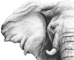 elephant charcoal drawing giclee print elephant decor elephant