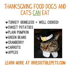 thanksgiving foods your pet can eat paw prints november december