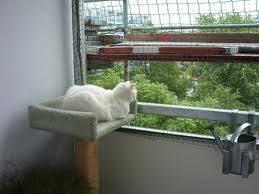 katzennetze balkon seite des anubis katzennetzte