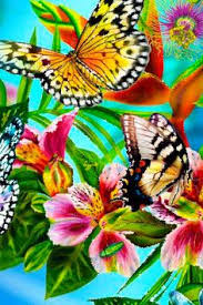 Roses And Butterflies - drawings of roses and butterflies greywolf s gallery