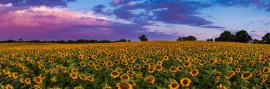 Kansas landscapes images Kansas landscape kansas beautiful landscapes of sunsets and jpg