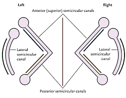 vestibular aqueduct anatomy gallery learn human anatomy image