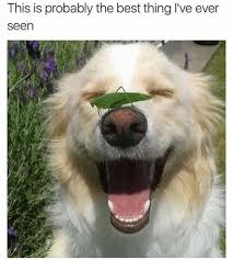 Frowning Dog Meme - 21 precious dog memes that will turn your frown upside down page 4