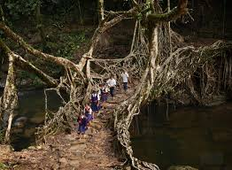 What Is Root Bridge Weekend Diversion The Living Bridges Of India U2013 Starts With A