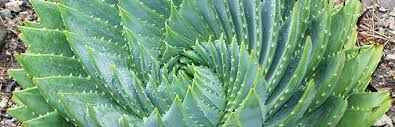 plant list agave bromeliads and succulents gardening solutions
