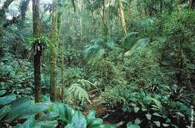 jungle hd wallpaper wallpapersafari