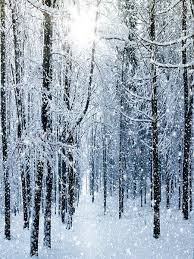 forest backdrop buy discount kate birch tree fall snow winter forest backdrop for