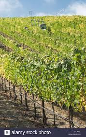wine grape trellis home design u0026 interior design