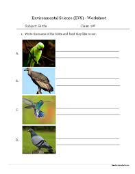 environmental science evs birds worksheet class ii