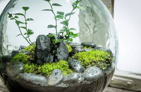 terrariums for offices shelving plants office planting u0026 flowers