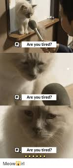 Tired Cat Meme - are you tired aare you tired a are you tired meow irl cat