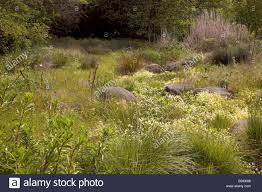 california native plant gardens spring meadow garden with dry creek as rain garden bioswale