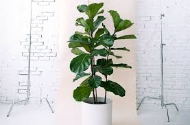 8 super cute indoor plants to buy now brisbane the urban list