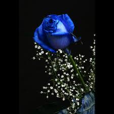 blue roses delivery blue roses via http blue roses delivery rainbow roses dried