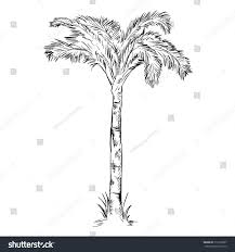 vector single sketch palm tree stock vector 316105037 shutterstock