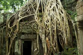 file angkor wat ta prohm temple doorway overgrown with tree roots