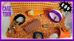 pumpkin u0027s halloween hamster cage tour youtube