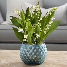 live gift plants plant u0026 flower gifts that just grow in beauty