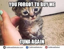 Cute Cat Memes - sad cat memes cat breed selector