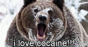 Coke Bear Meme - therapist says gaming is like snorting cocaine gamerz unite
