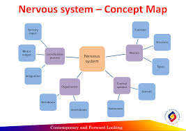 nervous system concept map physiology part 3 reflection concept map