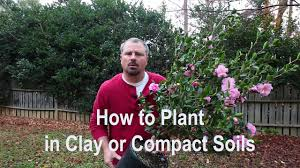 australian native plants for clay soil how to plant in clay poorly draining and compact soils proper