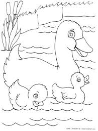 duck ducklings coloring u2013 kinderart
