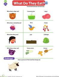 mammal classification worksheet mammals worksheets and have fun