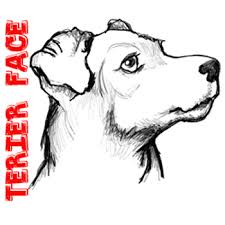 how to draw a terrier u0027s face dog u0027s face with easy steps how to