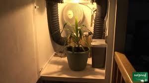installation chambre de culture culture en intérieur sous lumière artificielle 3 l arrosage