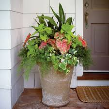Ideas For Container Gardens - 121 container gardening ideas container gardening asparagus