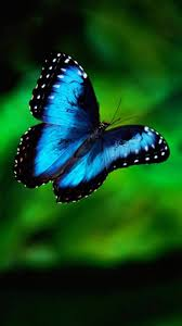 download butterfly iphone 7 stock wallpaper full size 3d iphone