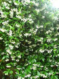 fast growing climbing plants climbing plants fast growing