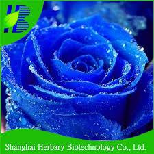 Blue Roses For Sale 2017 Latest Rainbow Rose Flower Seeds For Sale Buy Rose Flower