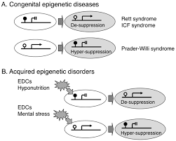 ijerph free full text epigenetic effect of environmental