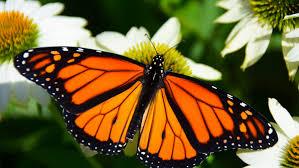 grow a year round wildlife habitat garden zone 9 11 grow
