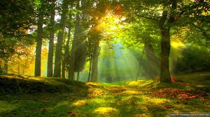 Wall Mural Forest Sunrise Wall Splendid Forest Wall Mural Decal Hd Wallpaper Background Id Forest