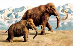 urgent bring woolly mammoth arctic