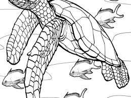 pics photos marine corps coloring page usmc coloring pages