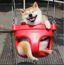 Shiba Inus Meme - there s a shiba inu who loves swings so the world can t be that bad