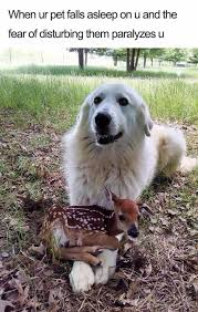 Deer Meme - fresh n funny memes n gifs of the month i can has cheezburger