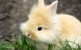 2048 cutest bunnies ever