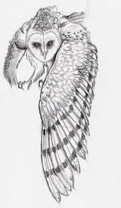 barn owl sketch by tokyoshorty on deviantart