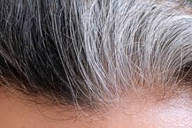 bder in grau wieso haare grau werden dermatologie derstandard at gesundheit