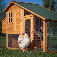 portable chicken coops buying guide hen cages wooden houses