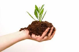 vegetable garden fertilizer 101 the gardening hut