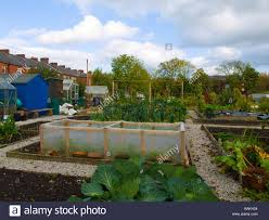 flowers and vegetables growing in british allotment stock photo