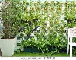 vertical garden on white wood lath stock photo 604474973