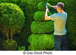 Topiary Plants Online - topiary trees stock photo images 1 628 topiary trees royalty free